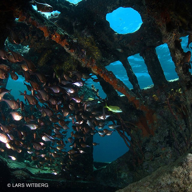 Inside shipwreck. Curacao, Caribbean.  #curacao #caribbean #diving #underwaterphoto #underwater #photo #photography #photooftheday #fish #scuba #shipwreck #adventure