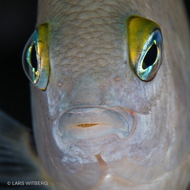 Wearing contacts? I know we think it is a lot of strange creatures under water, but the looks I get somtimes - they probably think the same.  #fish #caribbean #underwaterphoto #photo #underwater #ocean #travel #Travler_stories #scuba #scubadiving