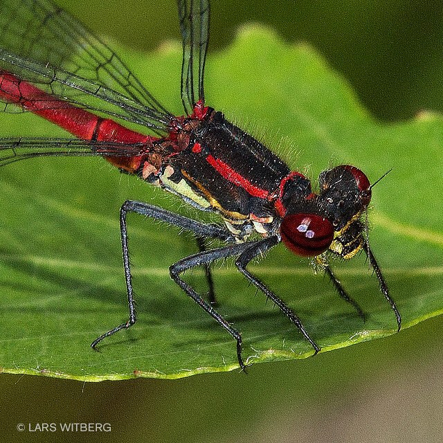Macro photography makes a trip into the forest a journey to another world.  Read more: http://reflections.no/?cat=14  #photo #photography #macro #insects #forest #dragonfly