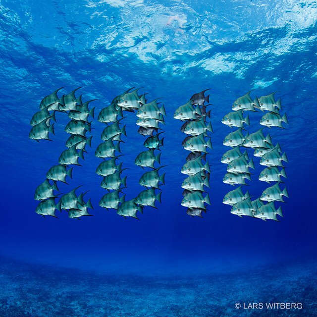 Happy New Year  Wish you all a year filled with wonderful adventures over and under water. Hope you seek close encounters with wild animals, meet interesting people and dip your feet in tropical water watching breathtaking sunsets. That is my goal for 2016.  #nakedplanet #awsomeglobe #egypt #redsea #sinai #beautifuldestinations #bestplacestogo #canon_photos #TravelAwsome #wonderful_places #marvelshots #amazing_animalpictures #pictoftheday #jj_underwater #instagram #underwater #arrowcrab #travel #scubadiving #underwaterphoto #photo