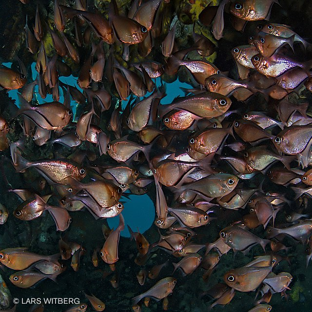 Swimming inside wrecks can be crowded.  Picture from Curacau.  #photo #adventure #travel #underwater #diving #scuba