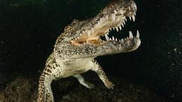 Croc_main