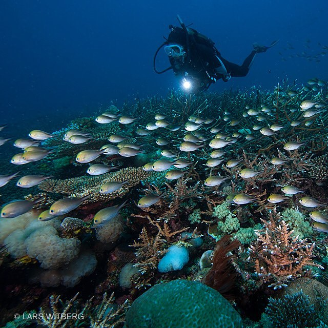 Coral Reefs are the largest thing alive on the planet. It is so big it is visible from space - but for how long. It has grown for over 250 million years but after humans came along, almost 1/5th is gone. 25% of all fish are dependent of our coral reefs and it is the biggest protein factory on earth. We need to stop killing the reefs. Ibo Island, Quirimbas, Indian Ocean.  #neednature #underwaterphotography #underwater #reef #coralreef #ocean