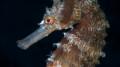 UV 05 Seahorse 3
