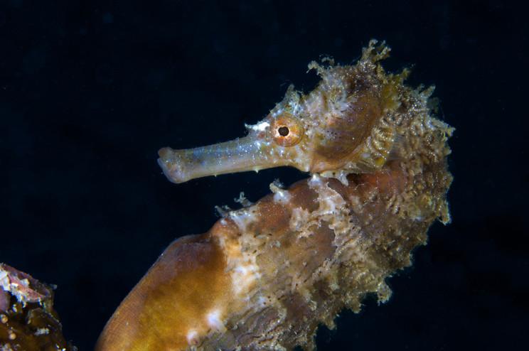 UV 05 Seahorse 4