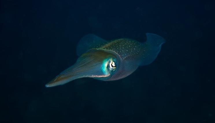 SmallOctopus