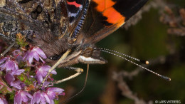 Butterfly_closeup