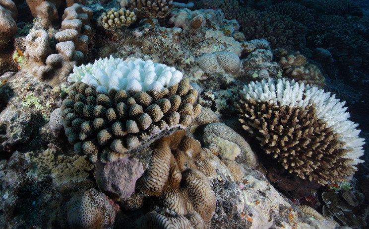 Coral_Bleach