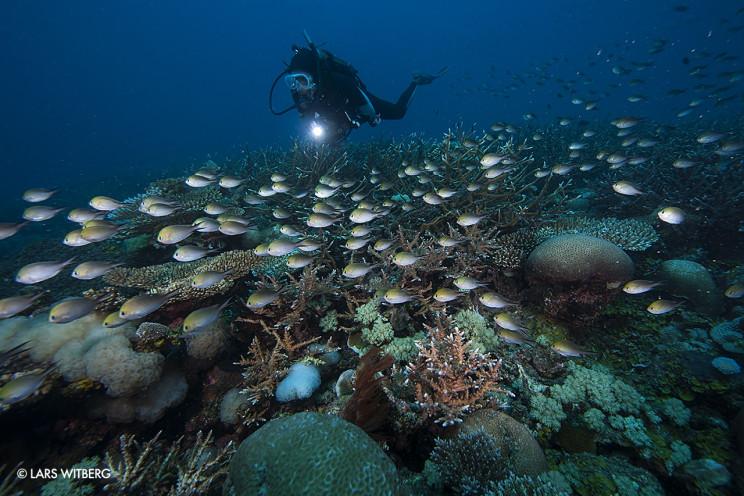 ReefLife
