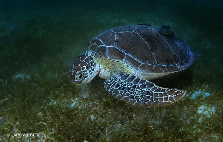 Turtle_2