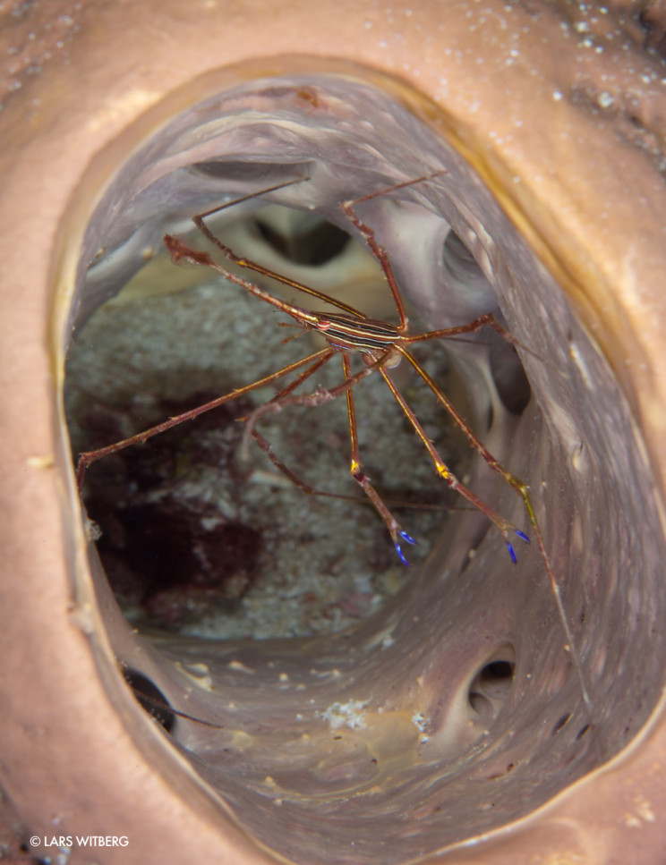 Arrowcrab_inside