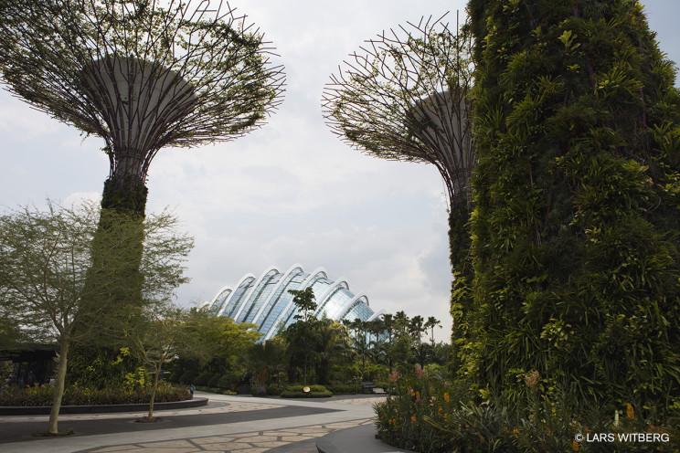 Singapore_trees