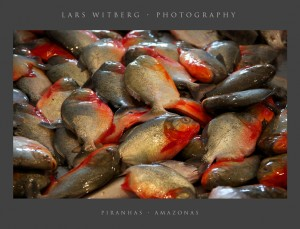 Red Piranhas