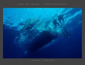 Sharks Bahamas